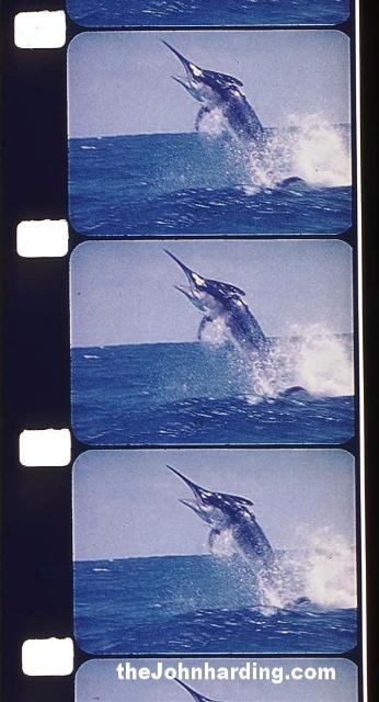 Marlin Frame